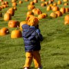 Pumpkin Patch at Harvest Hay Days